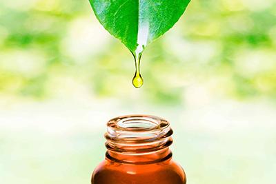 Spray dryer extractos vegetales